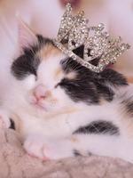 Emperor The Cat