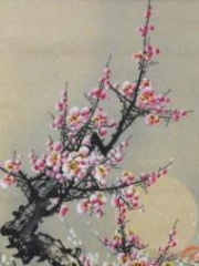 Under The Plum Blossom